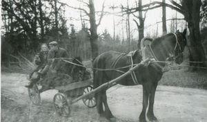 Lubānas slimnīcas zirgs, ar kuru devās mājās vizītēs, ap 1960.gadu. Madonas muzeja krājuma foto